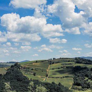 Fattoria e Villa di Rignana - Paesaggio 1